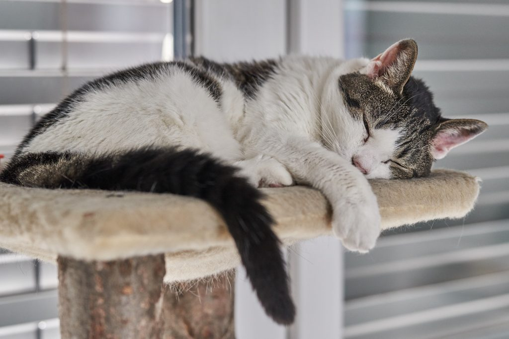 Keeping Cats Indoors: Why You Should and How To Do It