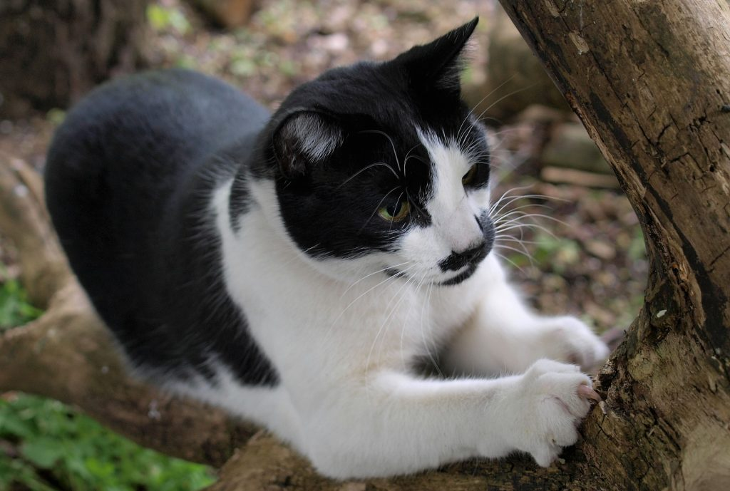 Don't Declaw Your Cat: Here's Why!